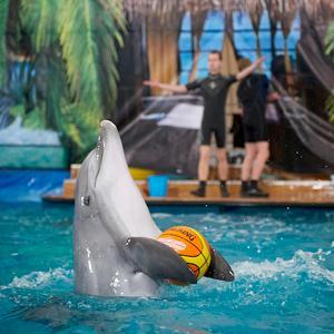 Дельфинарии, океанариумы Вырицы
