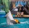 Дельфинарии, океанариумы в Вырице